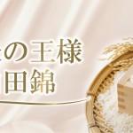 酒米の王様山田錦